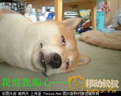 15919896_副本.jpg